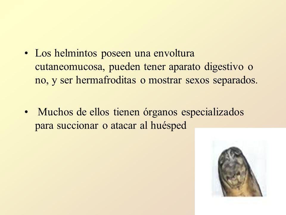 Los helmintos poseen una envoltura cutaneomucosa, pueden tener aparato digestivo o no, y ser hermafroditas o mostrar sexos separados.