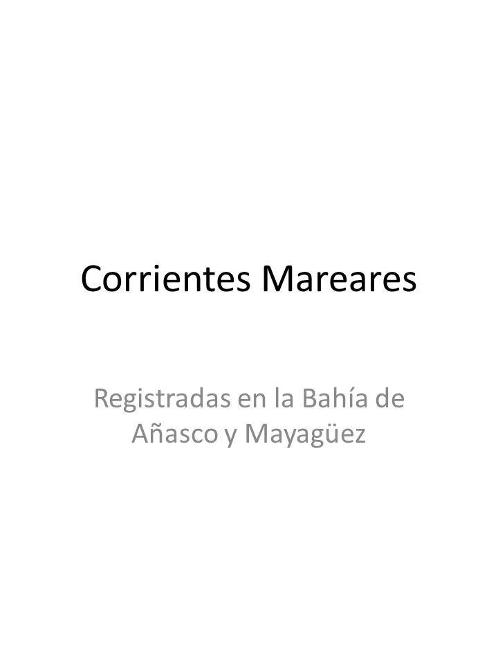 Registradas en la Bahía de Añasco y Mayagüez