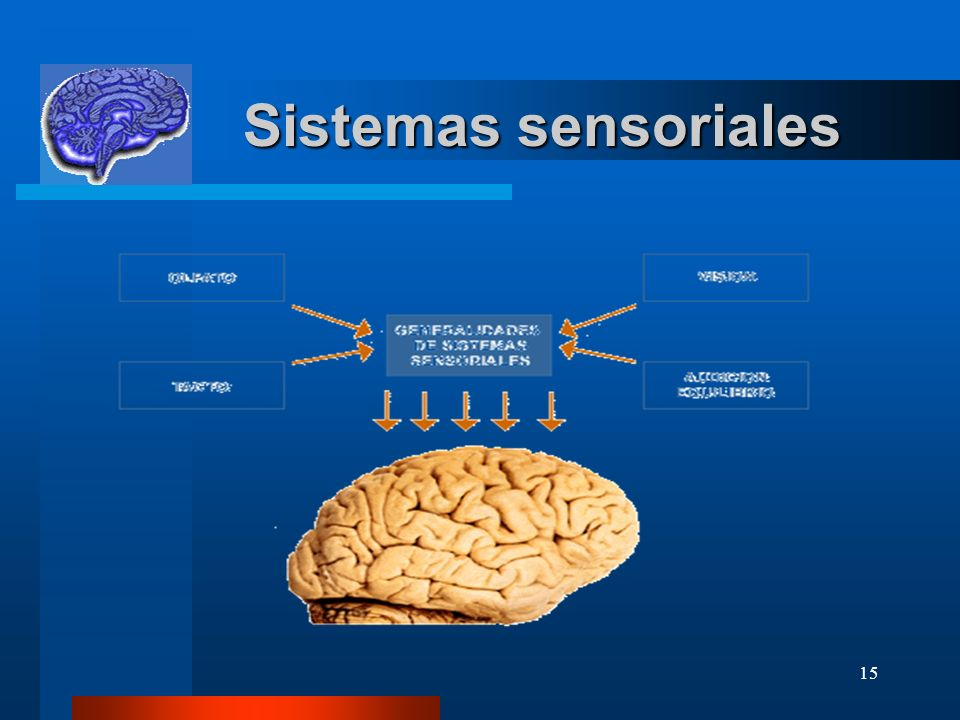 Sistemas sensoriales