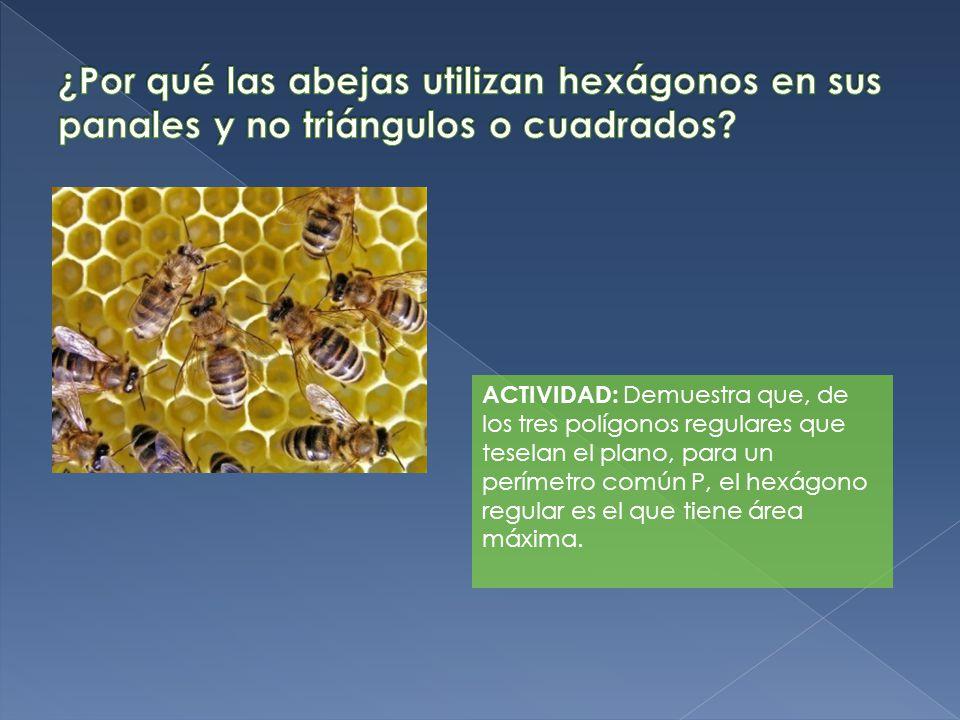 ¿Por qué las abejas utilizan hexágonos en sus panales y no triángulos o cuadrados