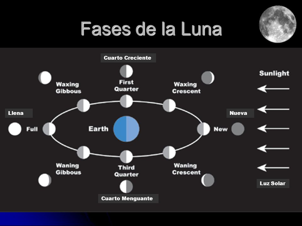 Fases de la Luna Cuarto Creciente Llena Nueva Cuarto Menguante