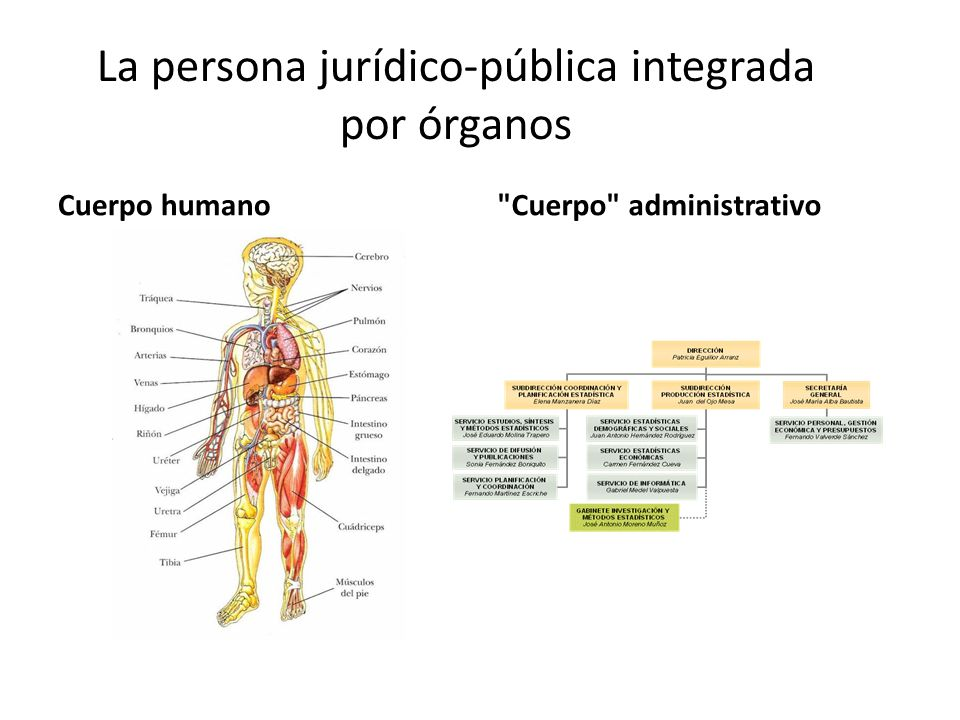 La persona jurídico-pública integrada por órganos