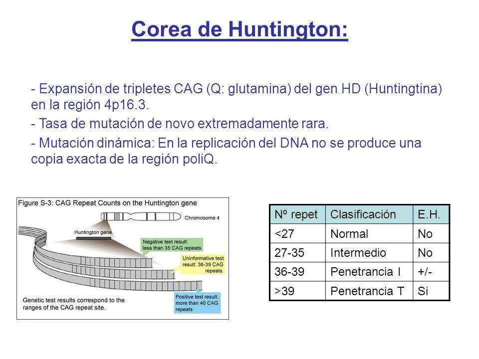 Corea de Huntington: Expansión de tripletes CAG (Q: glutamina) del gen HD (Huntingtina) en la región 4p16.3.