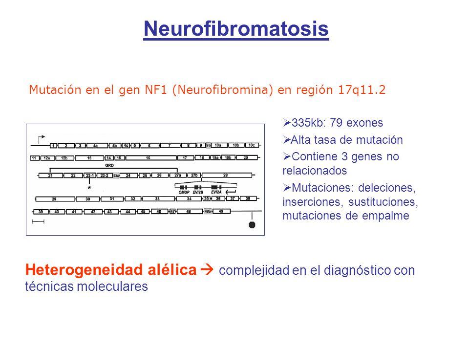 Neurofibromatosis Mutación en el gen NF1 (Neurofibromina) en región 17q11.2. 335kb: 79 exones. Alta tasa de mutación.