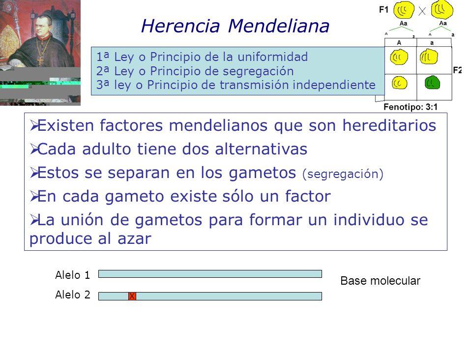 Herencia Mendeliana Existen factores mendelianos que son hereditarios