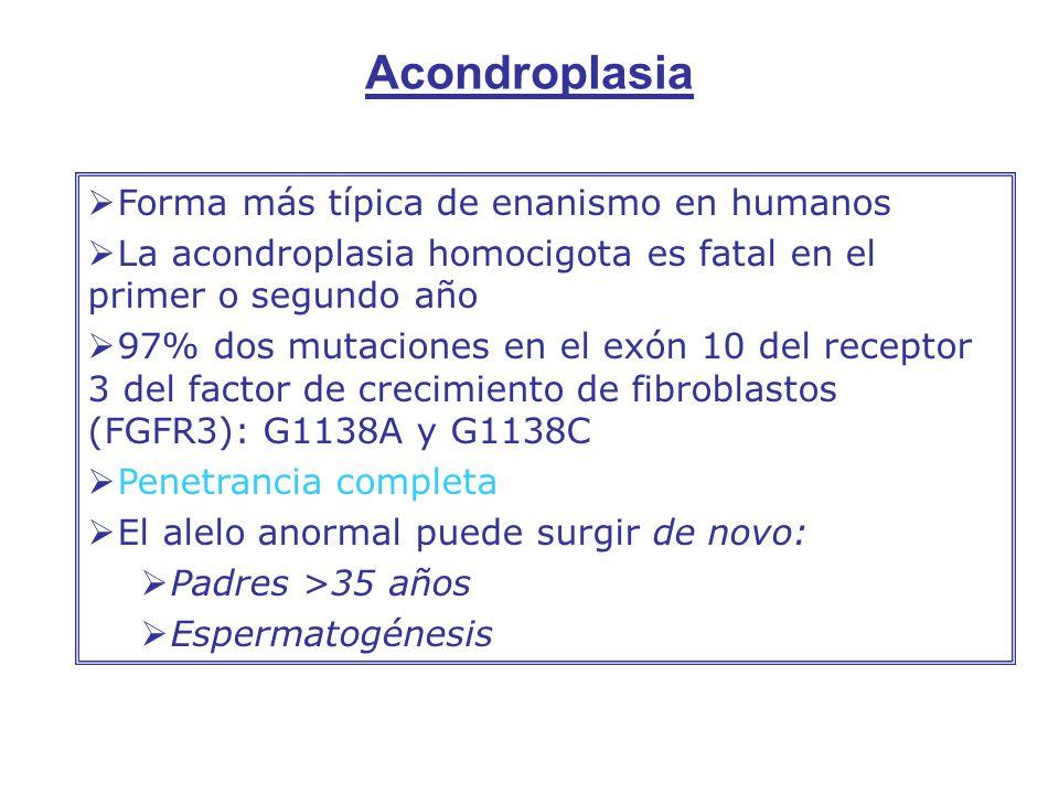 Acondroplasia Forma más típica de enanismo en humanos