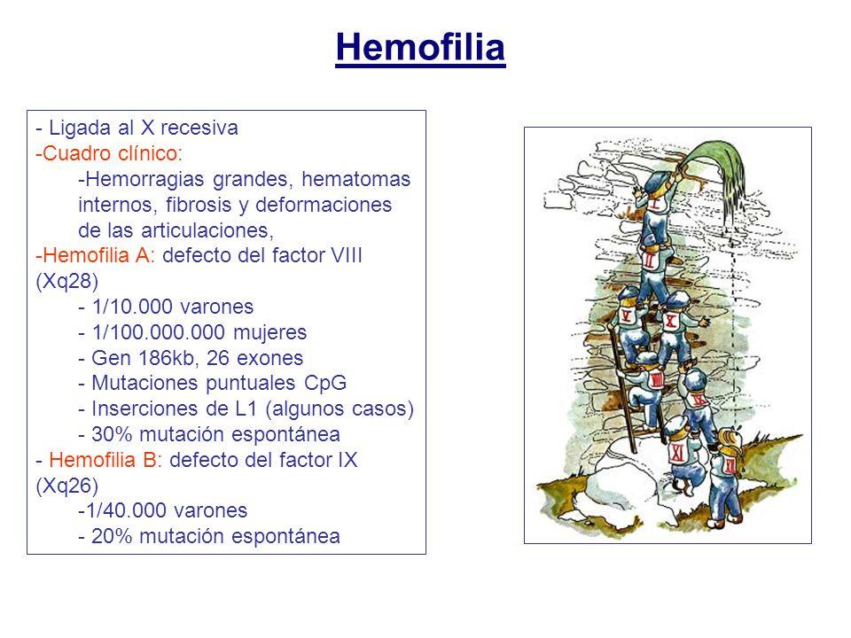 Hemofilia Ligada al X recesiva Cuadro clínico: