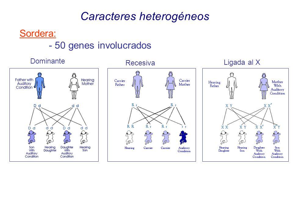 Caracteres heterogéneos