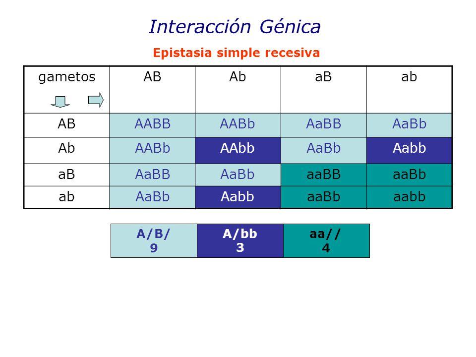 Interacción Génica gametos AB Ab aB ab AABB AABb AaBB AaBb AAbb Aabb