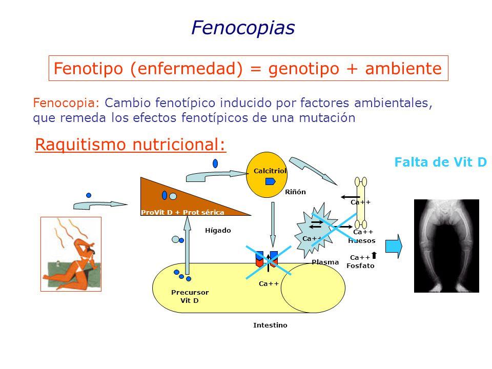 Fenocopias Fenotipo (enfermedad) = genotipo + ambiente