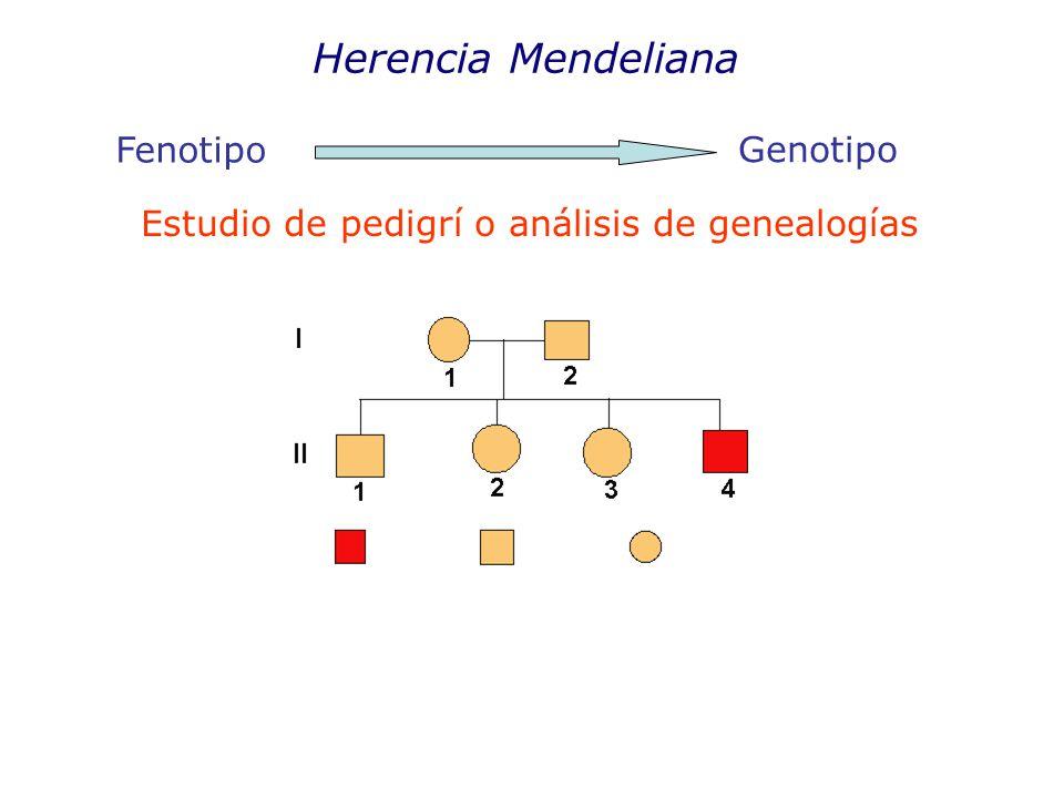 Herencia Mendeliana Fenotipo Genotipo