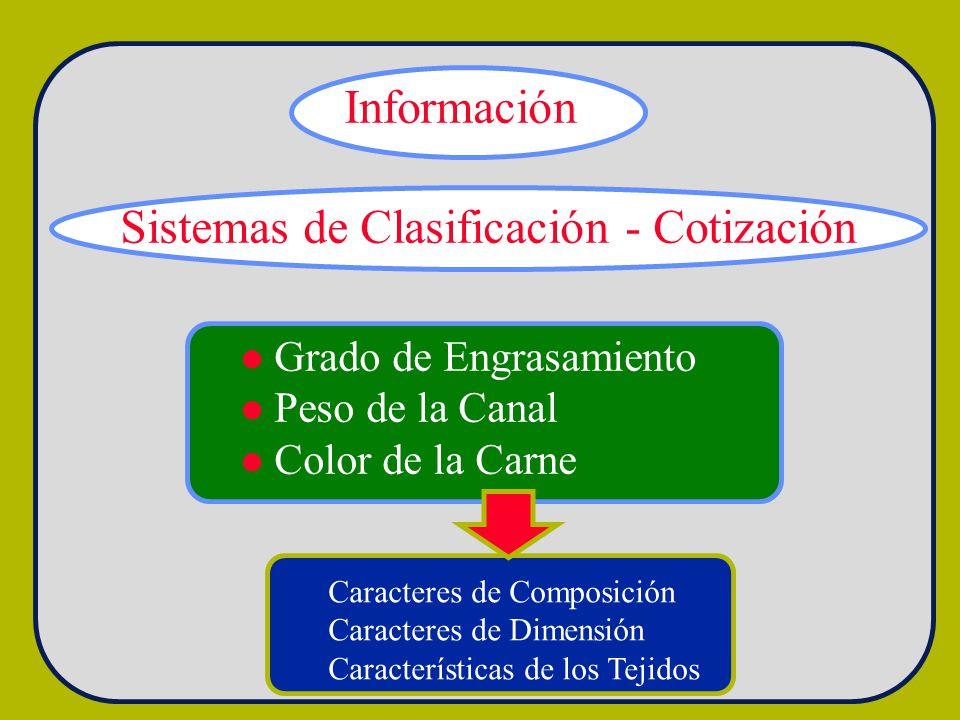 Sistemas de Clasificación - Cotización