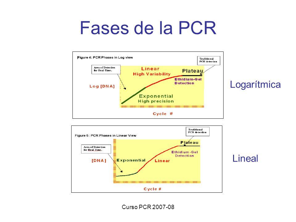 Fases de la PCR Logarítmica Lineal Curso PCR 2007-08