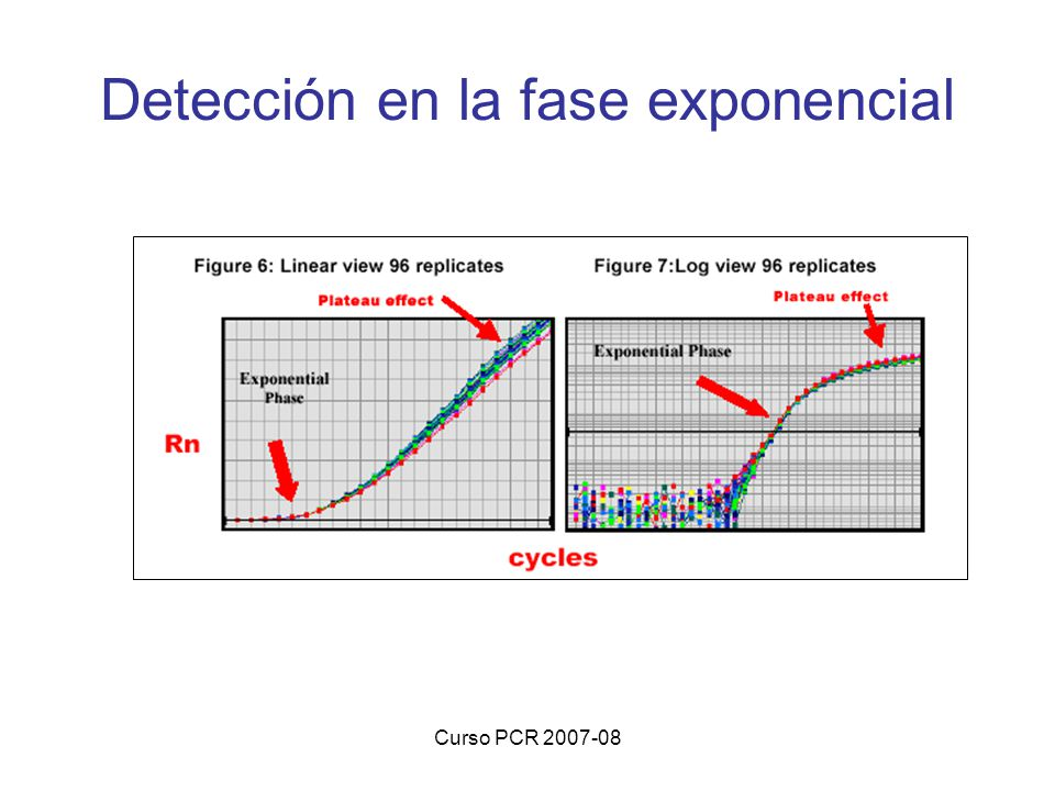 Detección en la fase exponencial