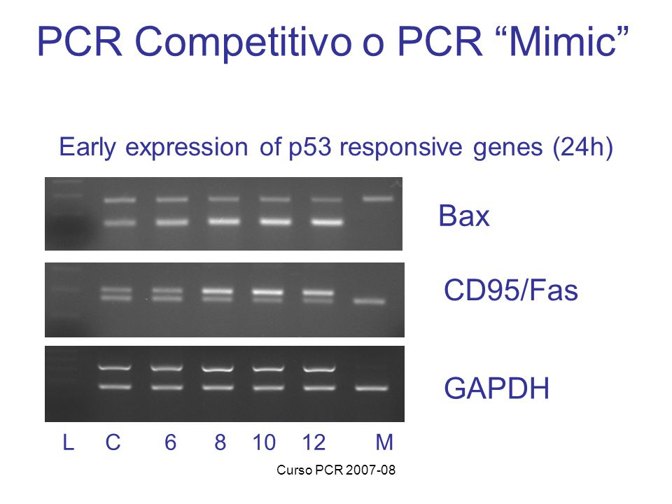 Early expression of p53 responsive genes (24h)
