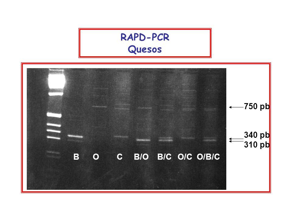 RAPD-PCR Quesos 750 pb 340 pb 310 pb B O C B/O B/C O/C O/B/C