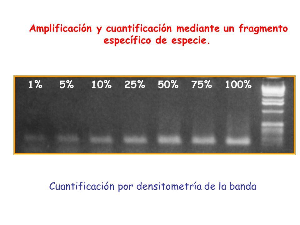 Amplificación y cuantificación mediante un fragmento específico de especie.