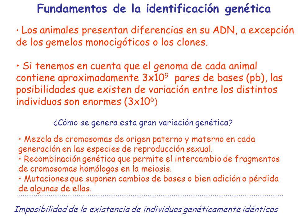 Fundamentos de la identificación genética