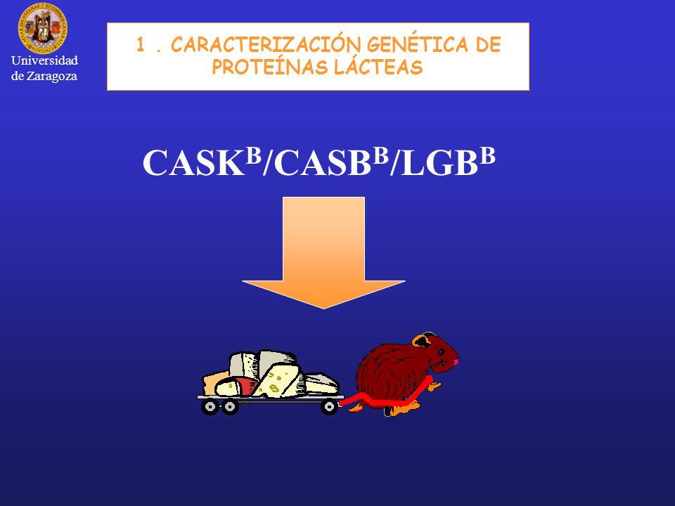 1 . CARACTERIZACIÓN GENÉTICA DE