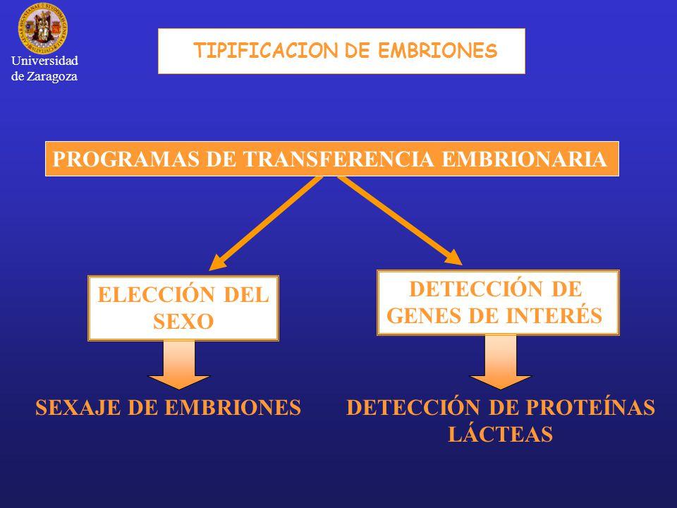 TIPIFICACION DE EMBRIONES
