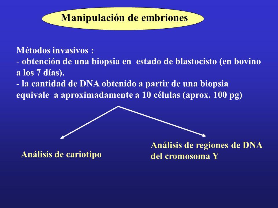 Manipulación de embriones