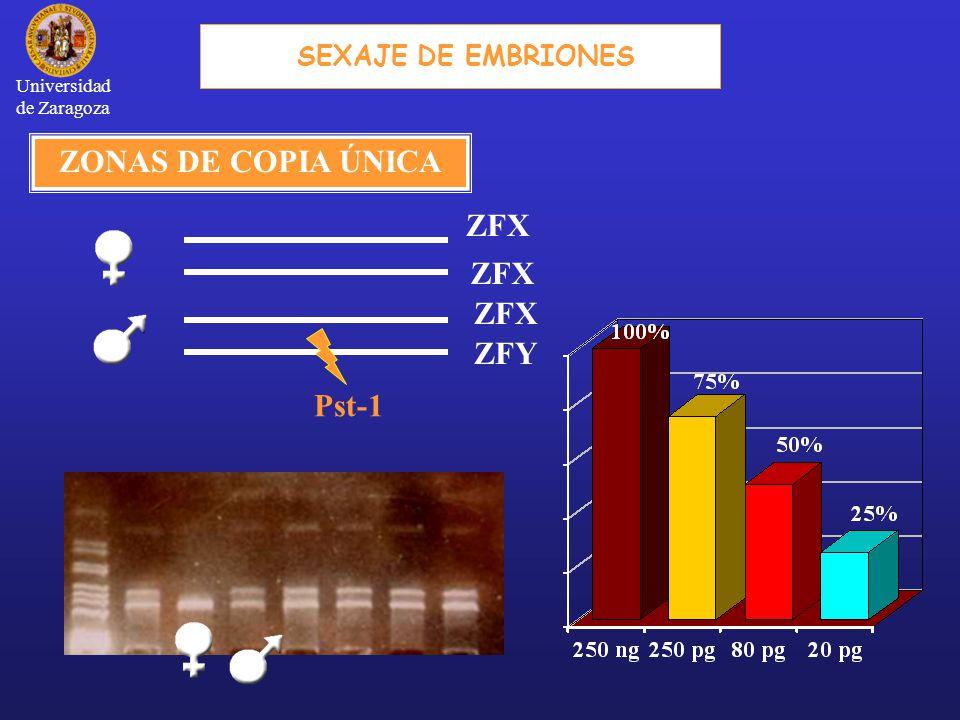 ZONAS DE COPIA ÚNICA ZFX ZFY Pst-1 SEXAJE DE EMBRIONES Universidad