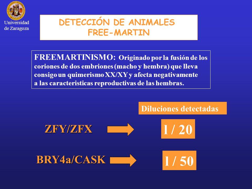 l / 20 l / 50 ZFY/ZFX BRY4a/CASK DETECCIÓN DE ANIMALES FREE-MARTIN