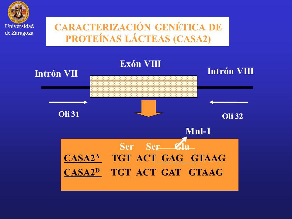CARACTERIZACIÓN GENÉTICA DE PROTEÍNAS LÁCTEAS (CASA2)
