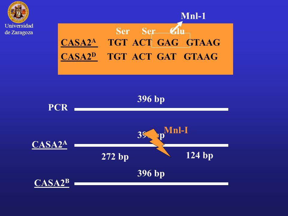 Mnl-1 Ser Ser Glu CASA2A TGT ACT GAG GTAAG CASA2D TGT ACT GAT GTAAG