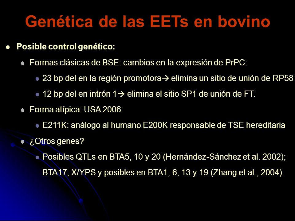 Genética de las EETs en bovino