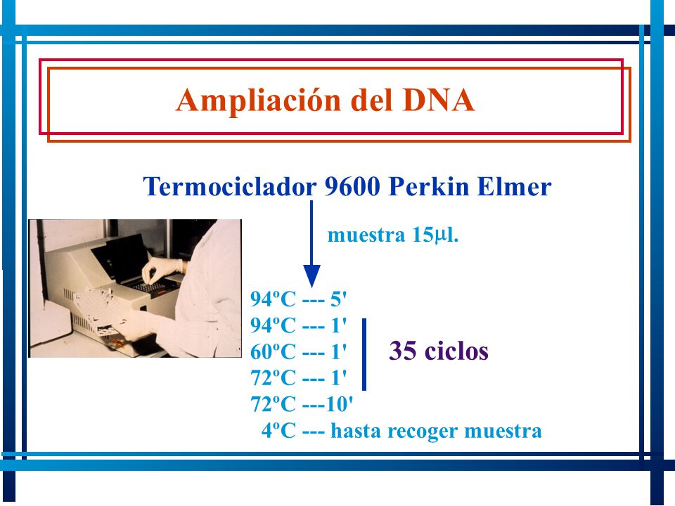 Ampliación del DNA Termociclador 9600 Perkin Elmer 35 ciclos