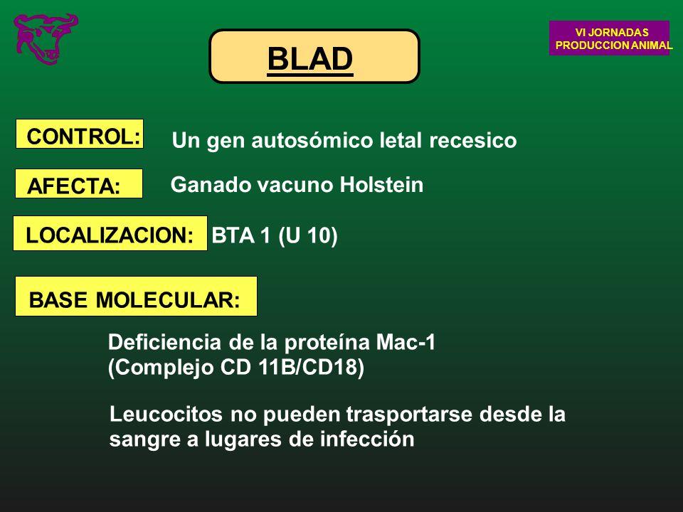 BLAD Un gen autosómico letal recesico Ganado vacuno Holstein