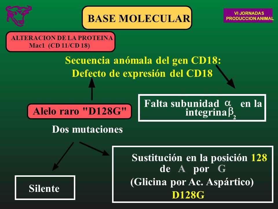Sustitución en la posición 128 de A por G (Glicina por Ac. Aspártico)
