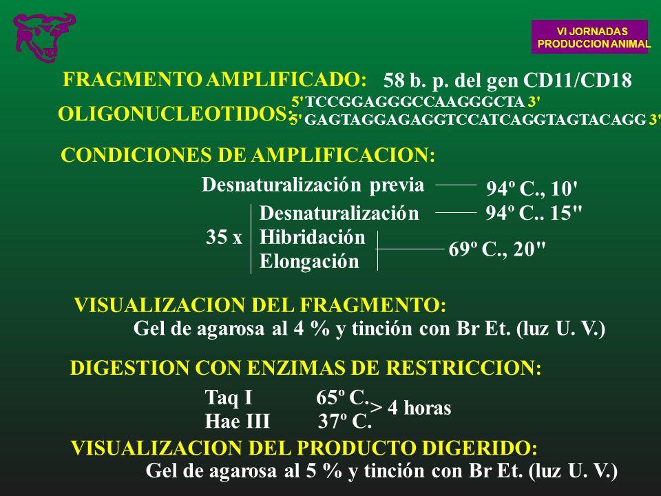 FRAGMENTO AMPLIFICADO: 58 b. p. del gen CD11/CD18