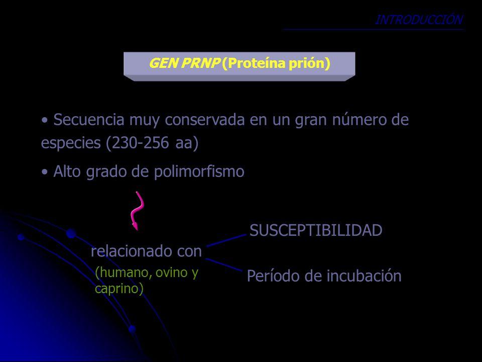 GEN PRNP (Proteína prión)