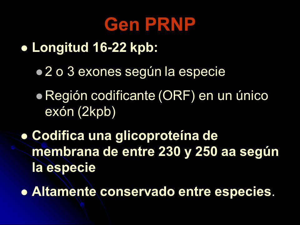 Gen PRNP Longitud 16-22 kpb: 2 o 3 exones según la especie