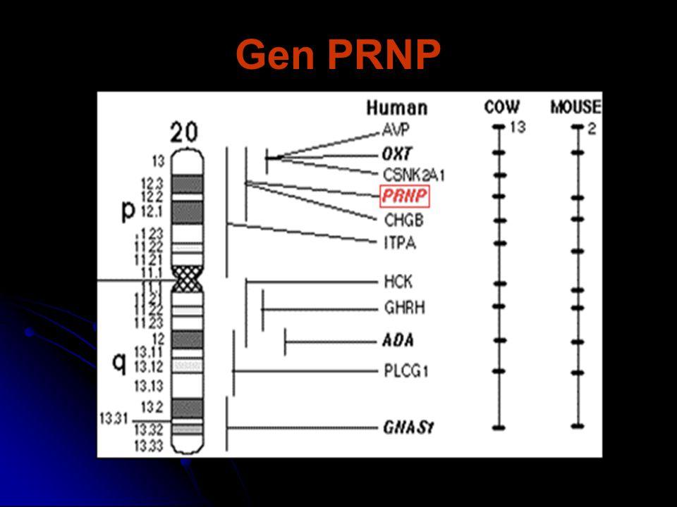 Gen PRNP