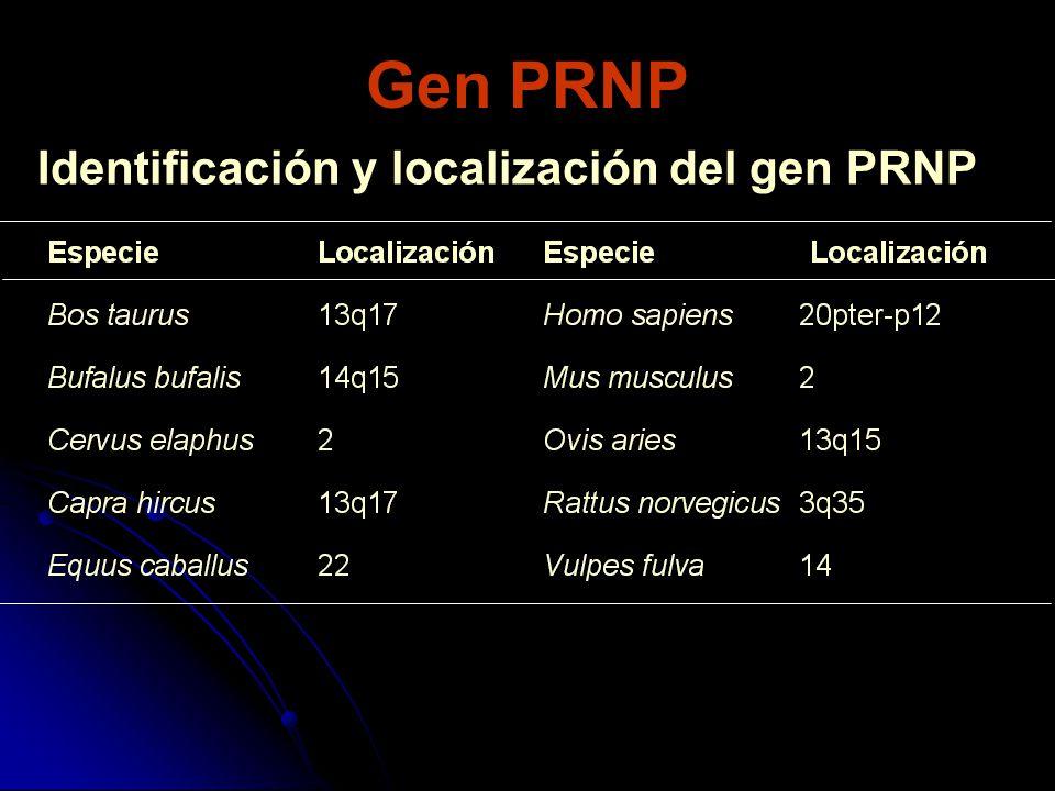 Gen PRNP Identificación y localización del gen PRNP