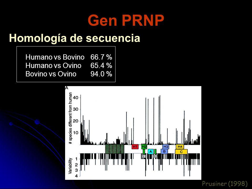 Gen PRNP Homología de secuencia Humano vs Bovino Humano vs Ovino