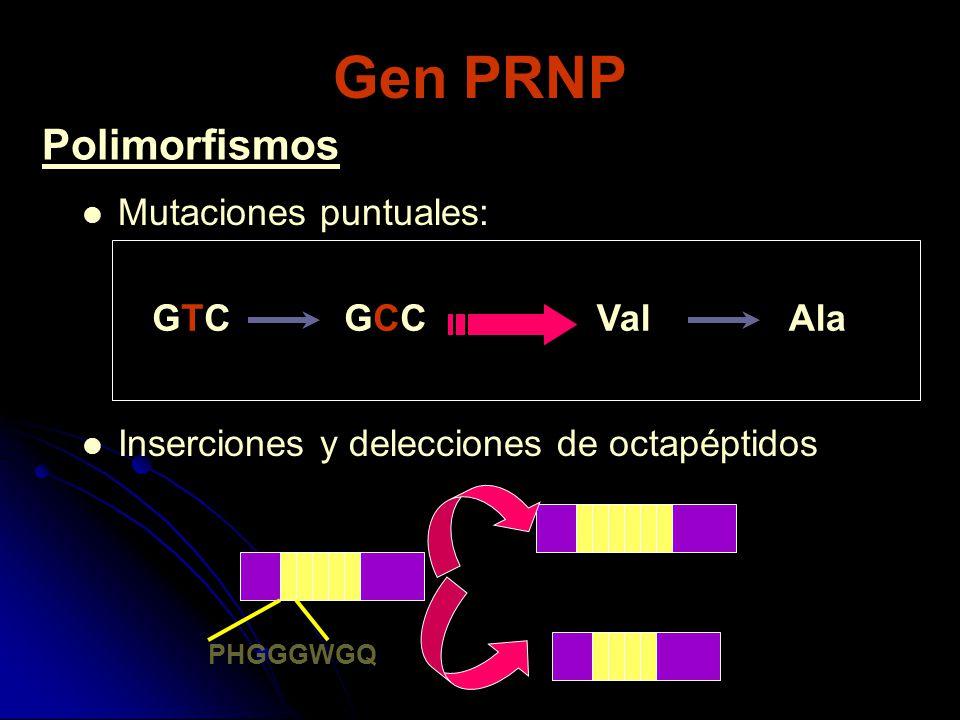 Gen PRNP Polimorfismos Mutaciones puntuales: