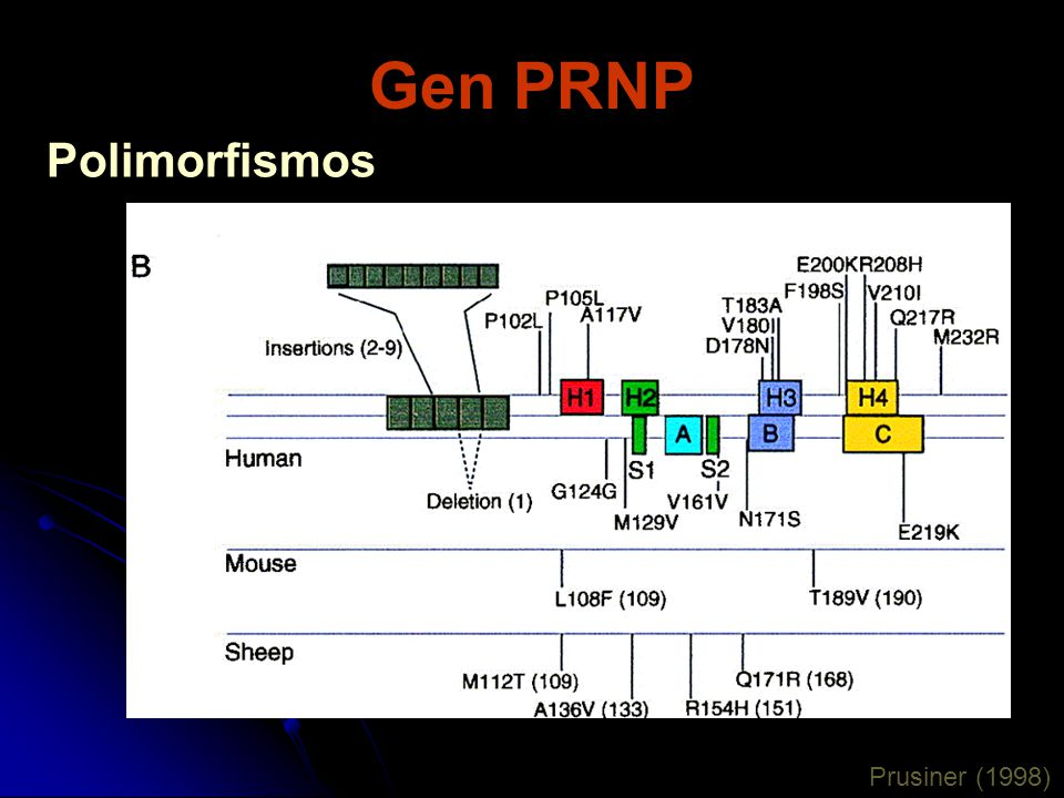 Gen PRNP Polimorfismos Prusiner (1998)