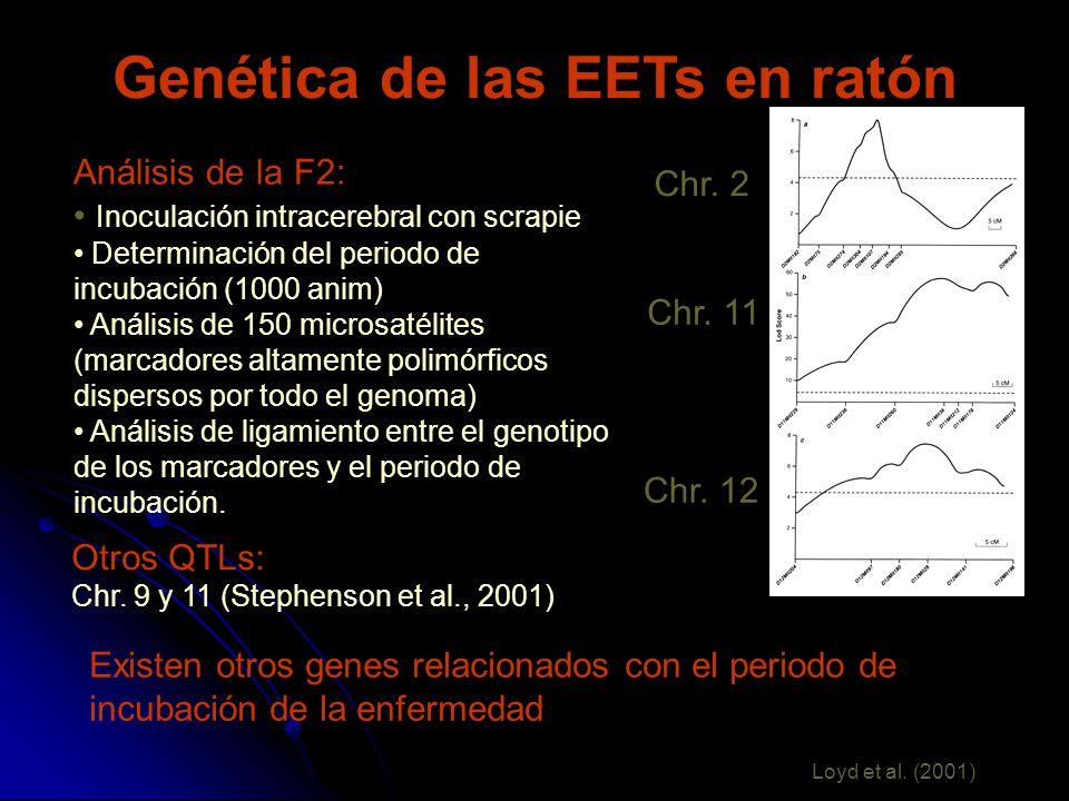 Genética de las EETs en ratón