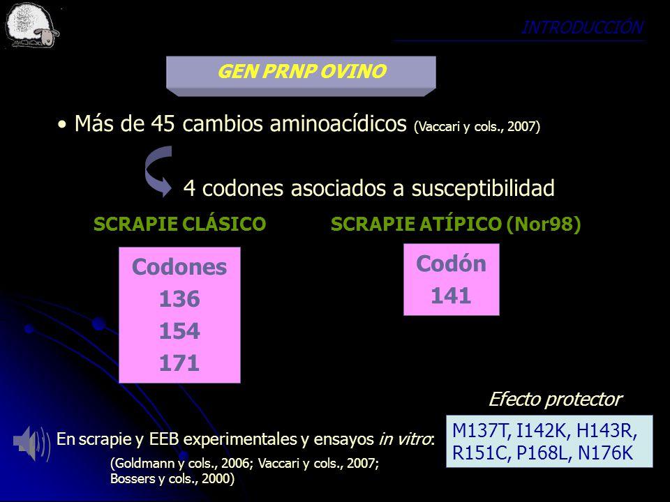 Más de 45 cambios aminoacídicos (Vaccari y cols., 2007)