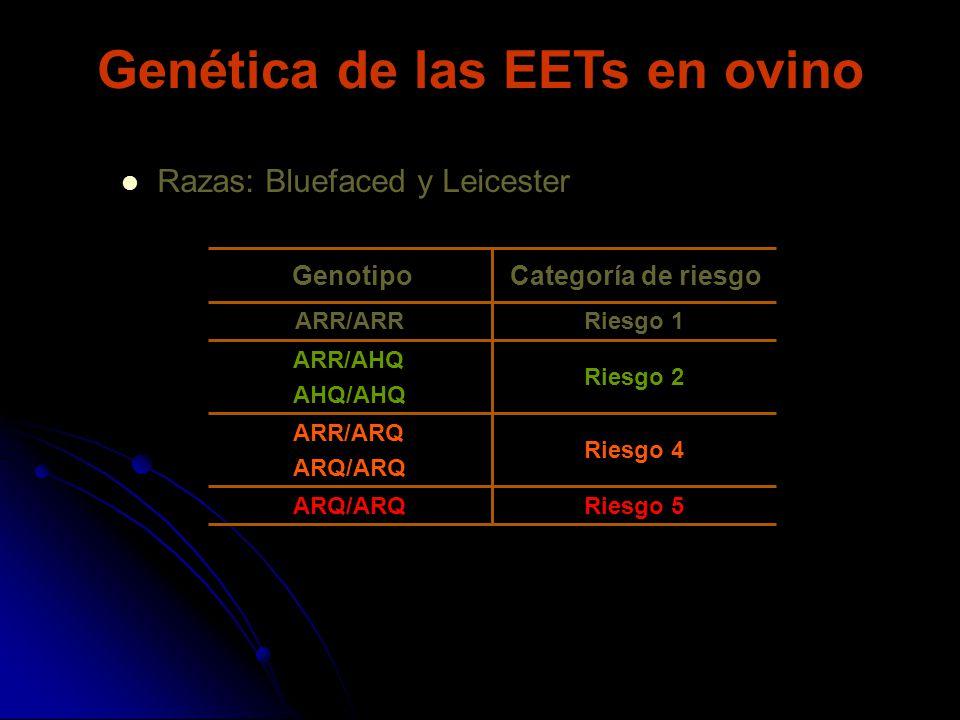 Genética de las EETs en ovino