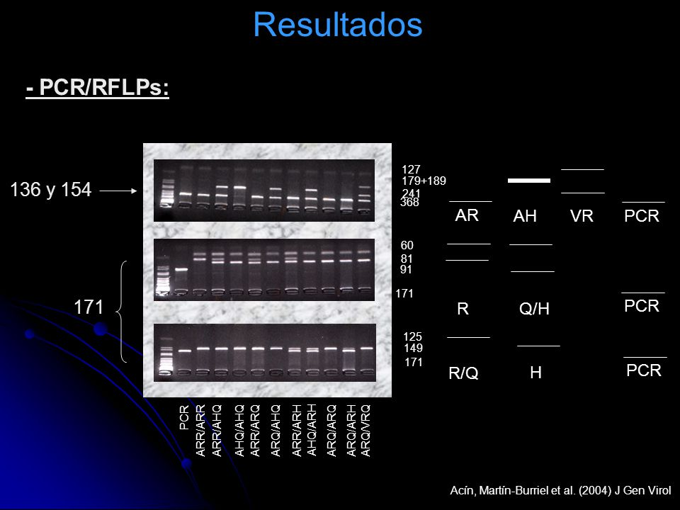 Resultados - PCR/RFLPs: 136 y 154 171 AR AH VR PCR R Q/H PCR R/Q H PCR