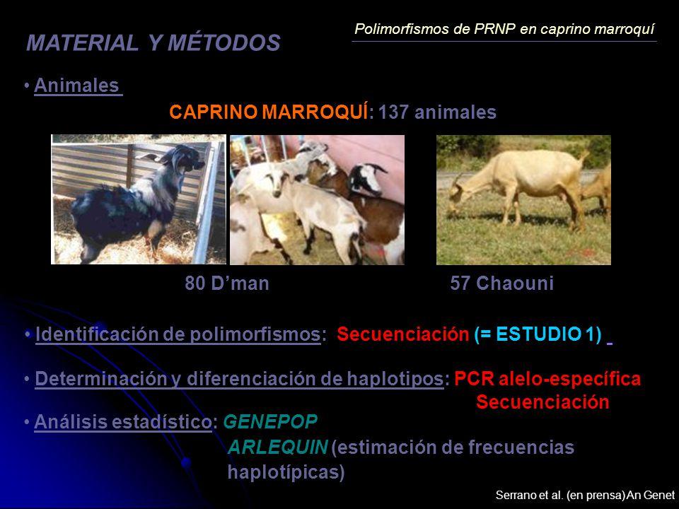 MATERIAL Y MÉTODOS Animales CAPRINO MARROQUÍ: 137 animales