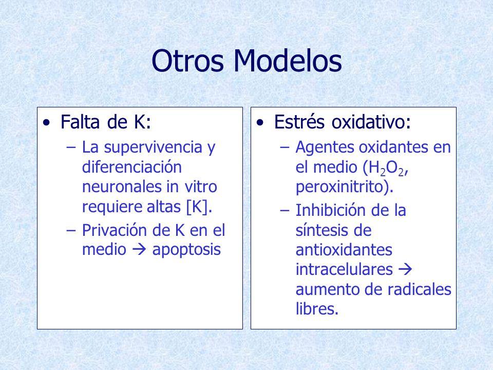 Otros Modelos Falta de K: Estrés oxidativo: