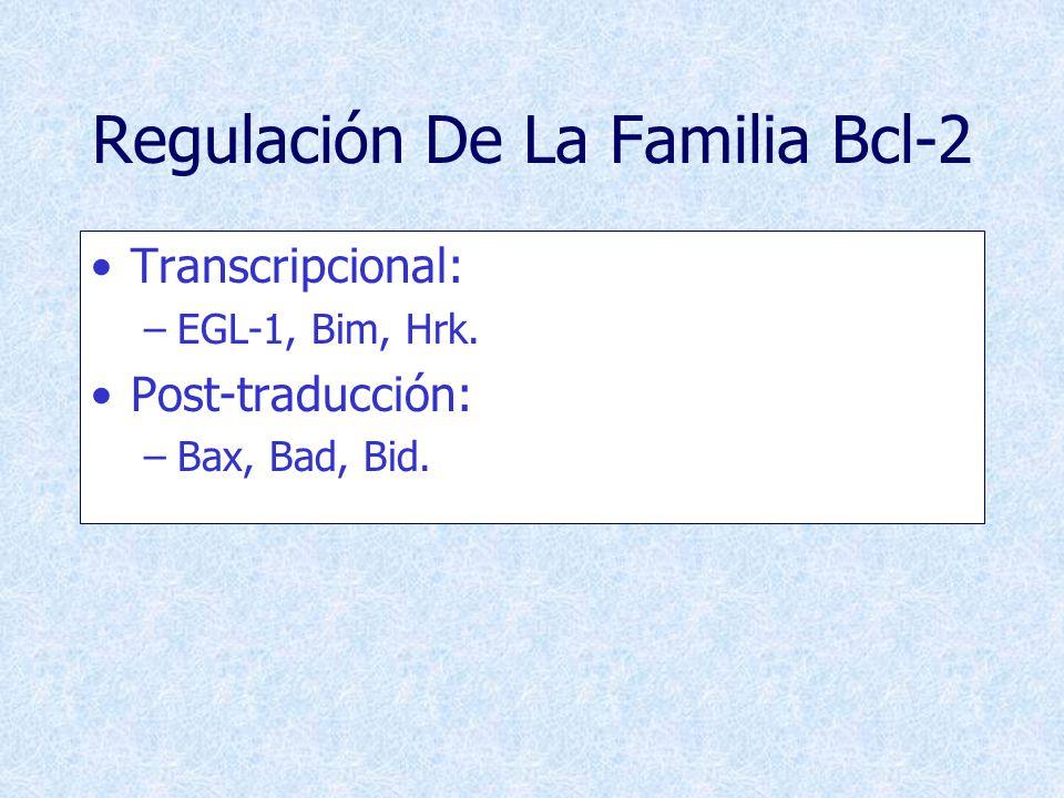 Regulación De La Familia Bcl-2