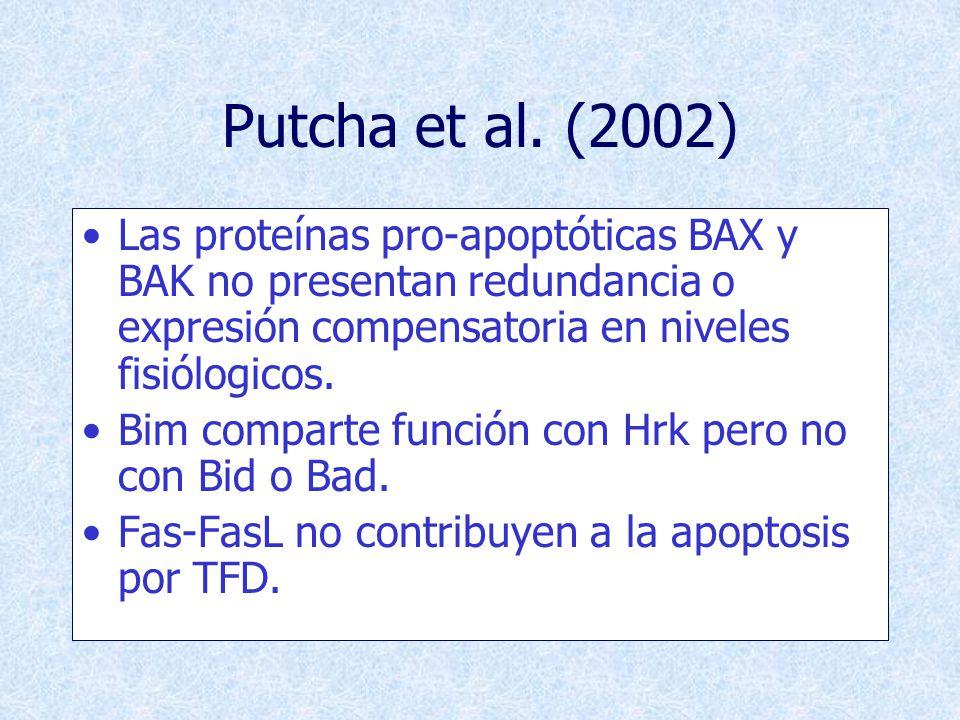 Putcha et al. (2002) Las proteínas pro-apoptóticas BAX y BAK no presentan redundancia o expresión compensatoria en niveles fisiólogicos.