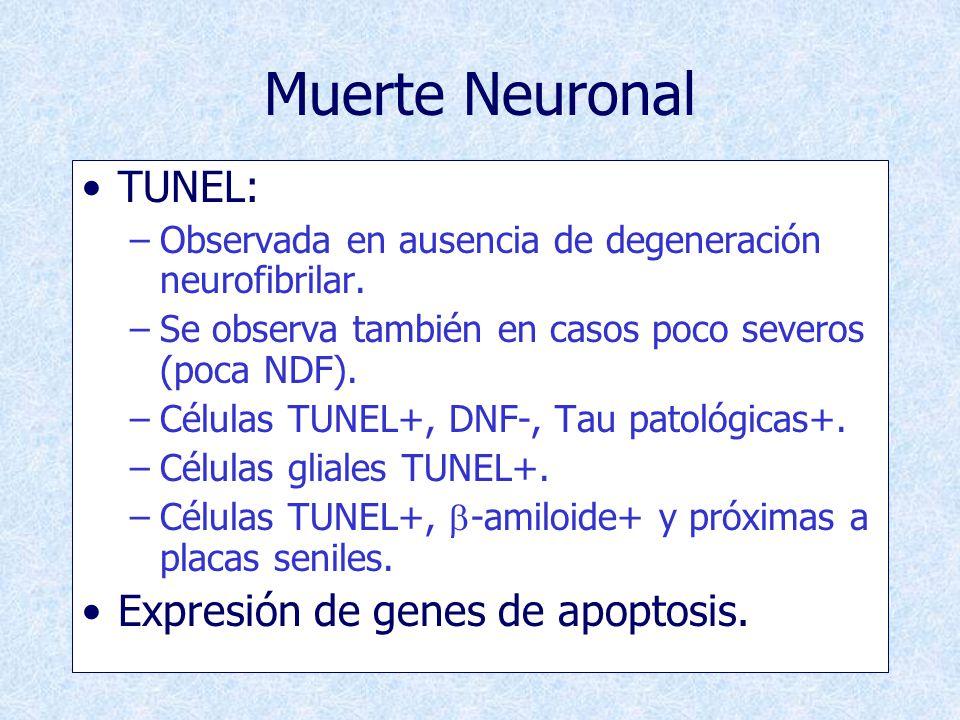 Muerte Neuronal TUNEL: Expresión de genes de apoptosis.
